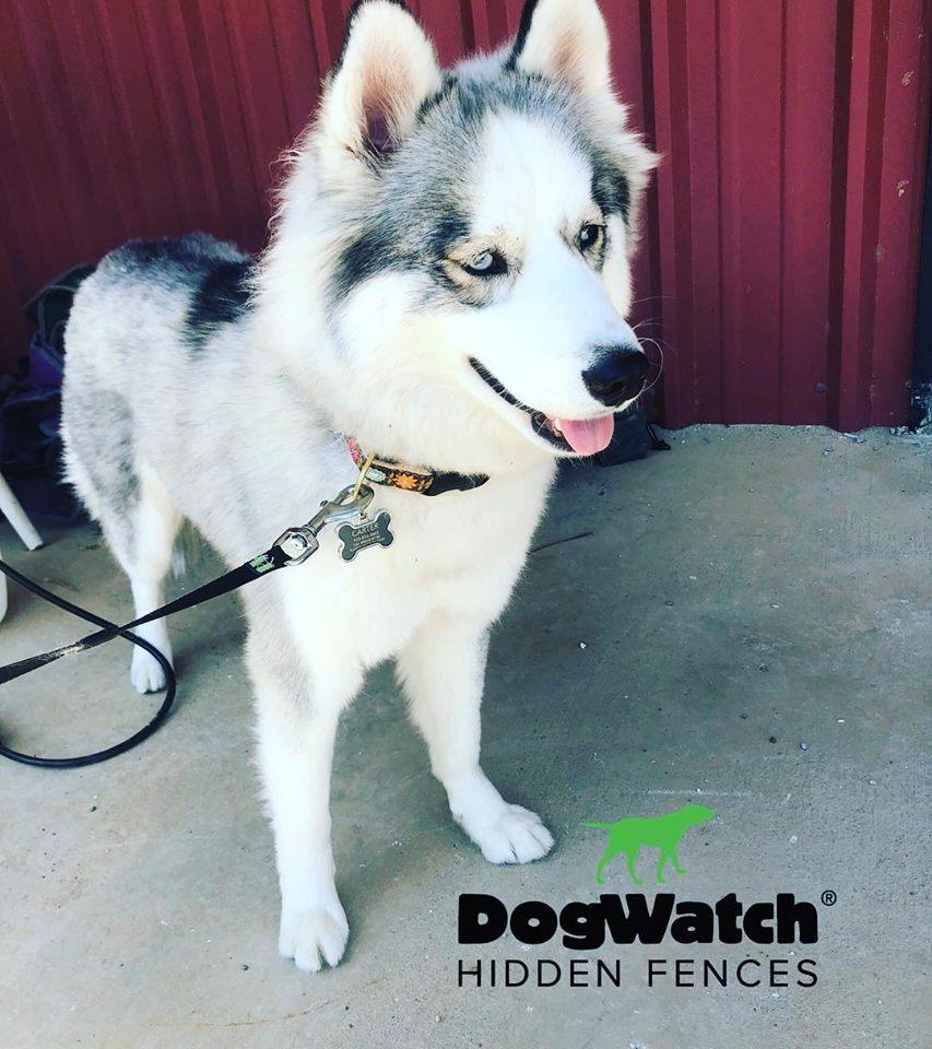 Hidden Dog Fence Customer Photo Gallery Dfw Dogwatch 174